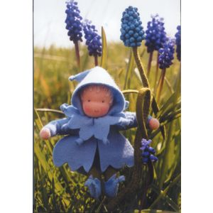 Bloemkindje Blauw Druifje 12 cm hoog