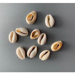 Cowrie sea shells 18-20mm 10 stuks 12454-5402