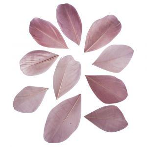 Veren gesneden oud roze Rayher 85 463 268